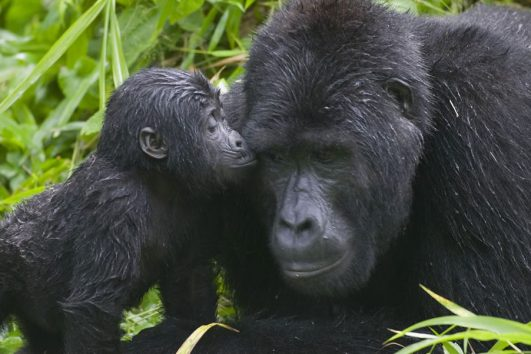 Bwindi Impenetrable National Park By Africa One Tours