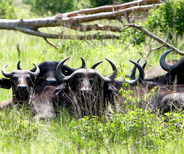 Kidepo Valley National Park 4 Day Wildlife Tour By Africa One Tours