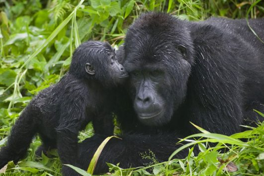 Bwindi Impenetrable National Park Africa One Tours