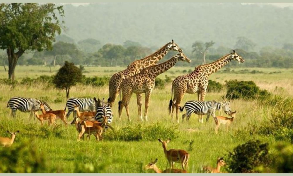 Murchison Falls National PArk, Africa One Tours and Travel Ltd