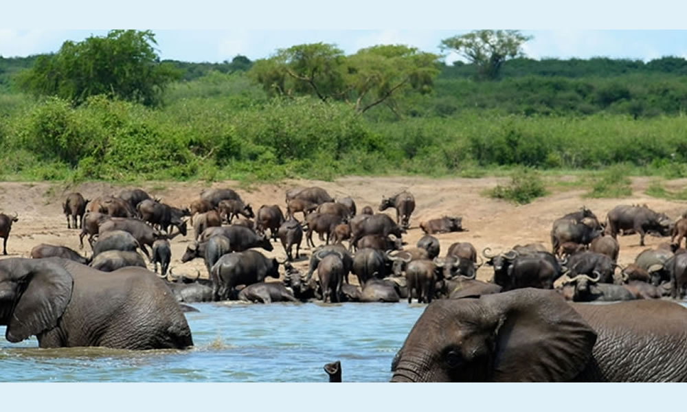 Africa One Tours and Travel Ltd