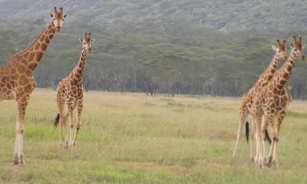 Semuliki National Park, Africa One Tours and Travel