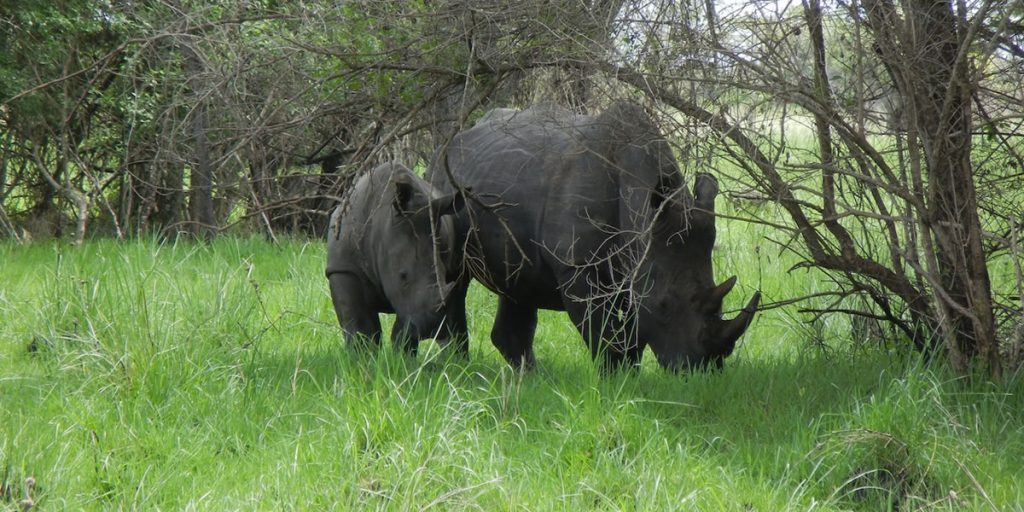 The Rhinoas Sanctuary in Uganda by Africa One Tours
