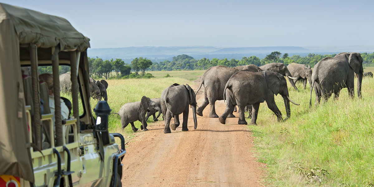 Tour Guide By Africa One Tours