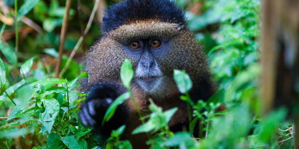 Uganda Travel and Tours By Africa One Tours