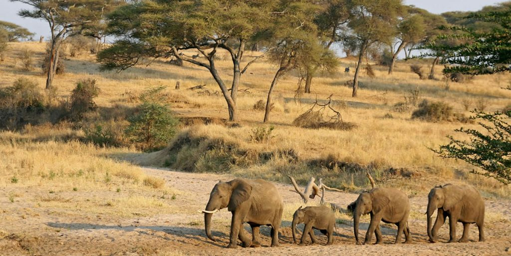 Wildlife Viewing Game Drive and Savannah By Africa One Tours